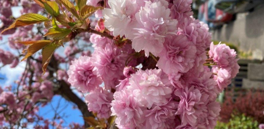 Blossom by April McIntyre